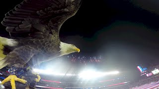 Challenger Soars at Philly Eagles Military Appreciation Game 2014