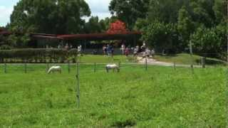 1. Hosanna Farmstay - The Place
