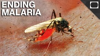 Are We Close To Ending Malaria?