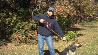Bungee Training Dog Leash