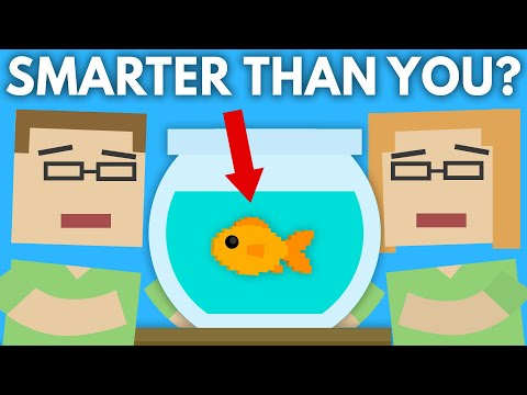 What Would Make This Fish As Smart As You?