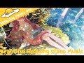 【唯美•鋼琴】2小時唯美抒情鋼琴音樂 (2018) —— 帶給你不一樣的享受 療愈系 作業用 bgm / 2 Hour Beautiful Relaxing Piano Music (2018)