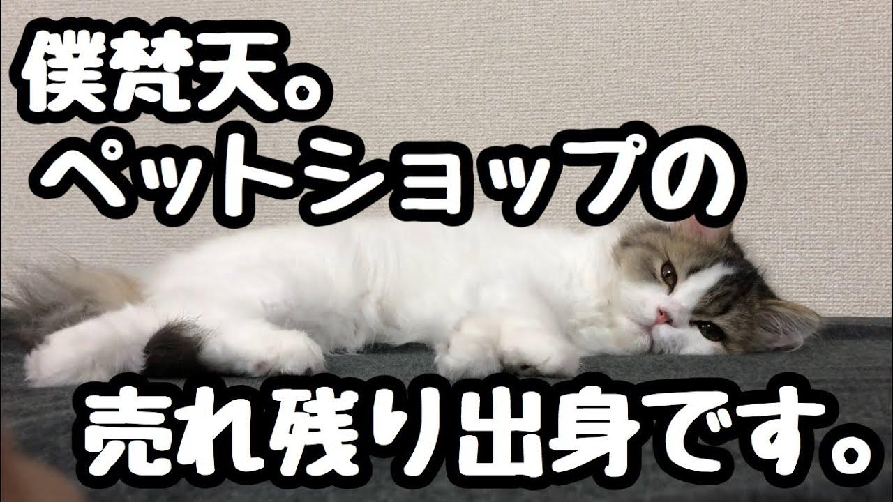 ショップ 売れ残り 猫 ペット 保護・譲渡の犬猫 里親募集