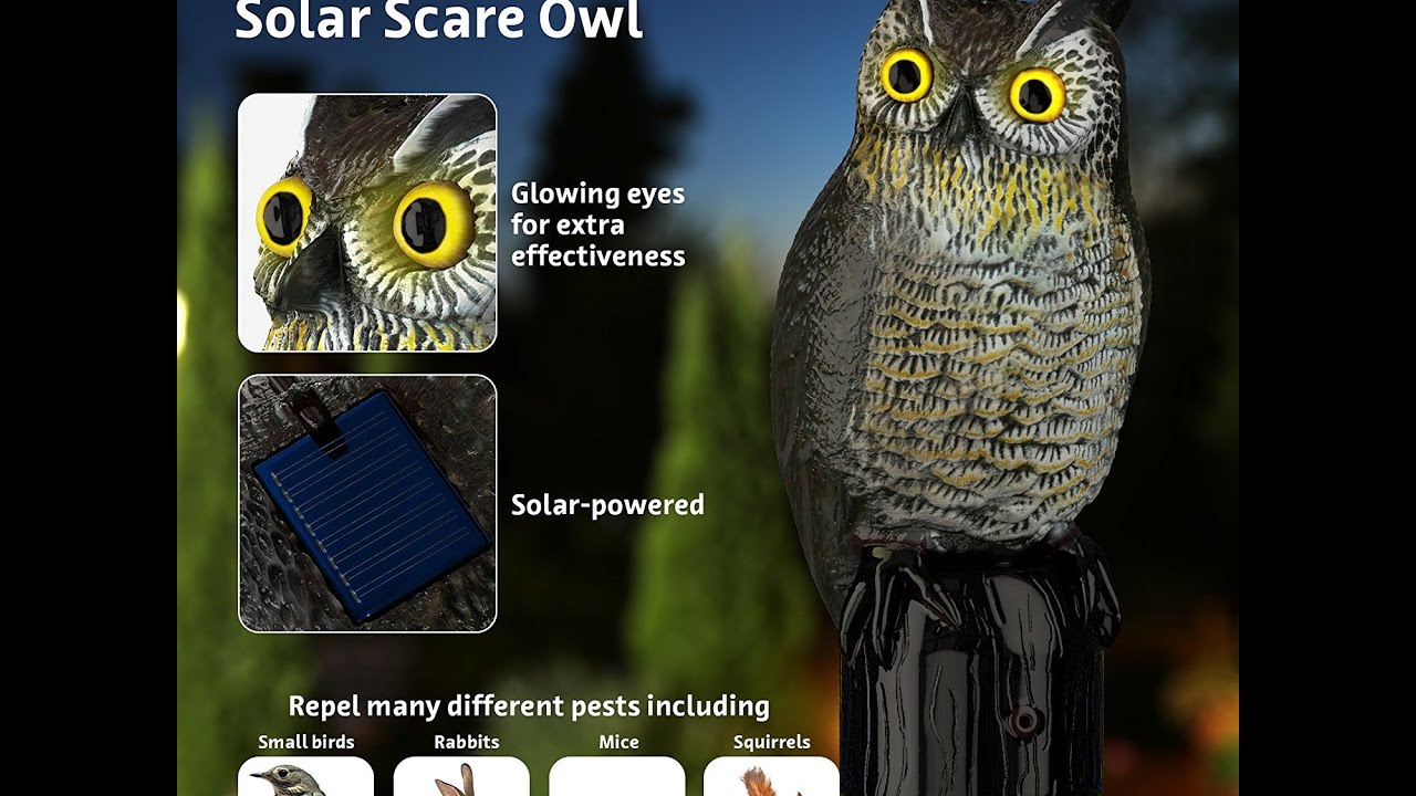 Hoont Realistic Owl Scarecrow| Flashing Eyes, Frightening Sound For Birds,  Pests, Solar Powered
