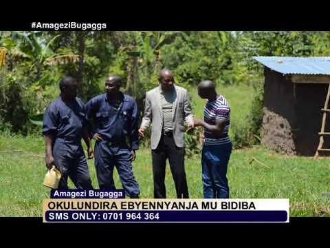 FISH FARMING IN UGANDA AMAGEZI BUGAGGA