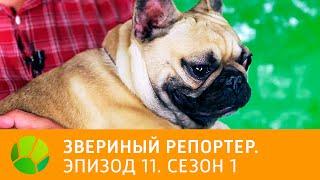 Звериный репортер  Эпизод 11  Сезон 1