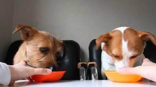 ヨーグルトがだいすき。毎日のお昼ご飯後に必ず食べます。