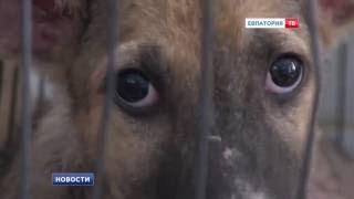 Уменьшить количество бездомных собак
