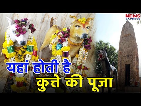 Amazing temple of India where dog worship by People
