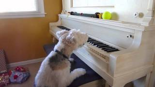 Scotchy At The Piano.mov