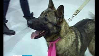 Акция-раздача животных прошла в Петрозаводске