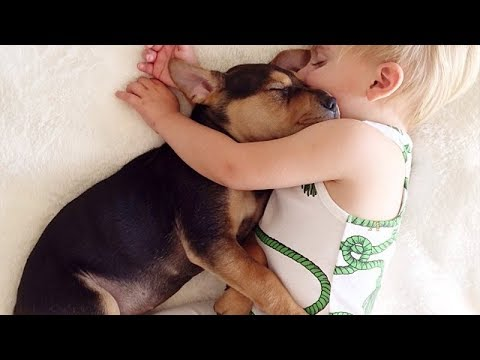 TRY NOT TO AWW! at This Cute and Funny Babies with Pets Videos