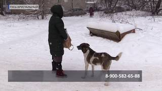 2018 12 28 В Гусе заживо сожгли собаку