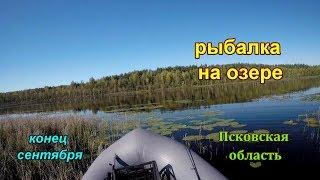 Щучья рыбалка на Окуня на озере Псковская область в солнечный день
