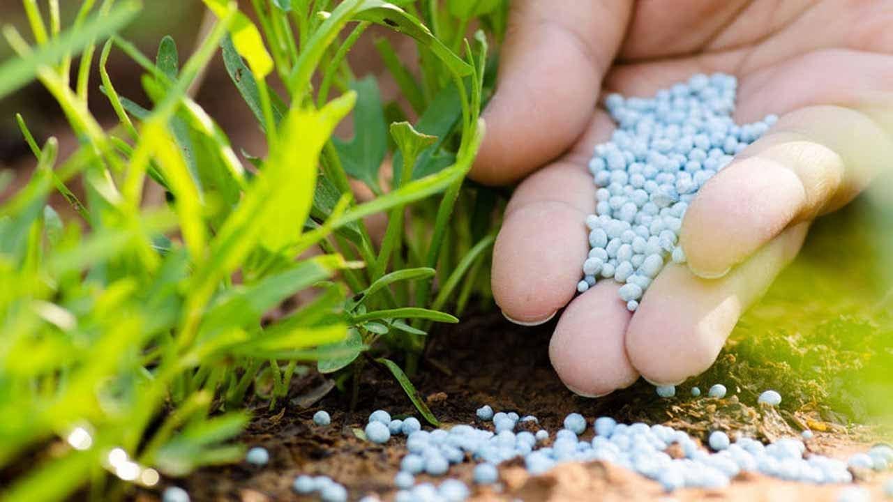 Cách nhận biết phân bón kém chất lượng | Xuân Nông