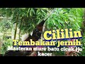 Cililin Masteran Buat Mure Batu Cocak Ijo Kacer Anda  Mp3 - Mp4 Download