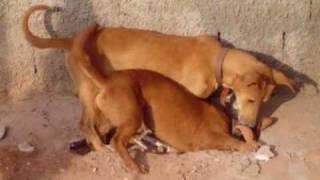 cachorro x ratazana