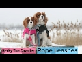 INTRODUCING: Rope Leashes for Dogs by Herky The Cavalier | NEW Boutique Launch