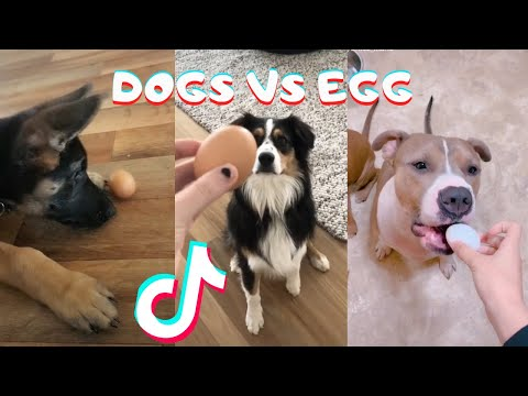 Dogs Try The Viral Egg Challenge Tik Tok Compilation - So Cute