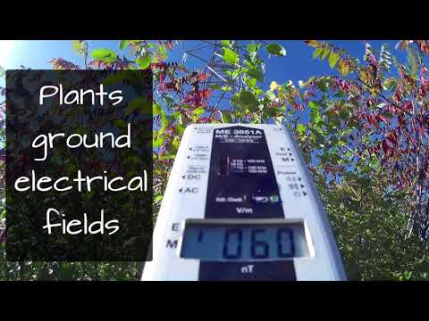 Household Plant Attracting Electrical Fields