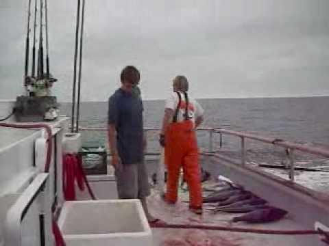 Gos fishing tuna fishing san diego point loma sport for Point loma sport fishing