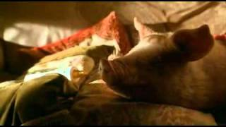 Farmer Hogget Sings To Babe - If I had words.mp4