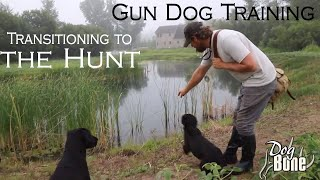 Gun Dog Training: Transitioning to the Hunt | Part: #1