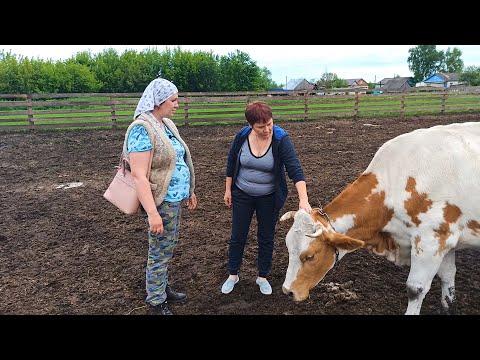 Вопрос: Почему пасущиеся коровы поворачиваются головой на юг или север?