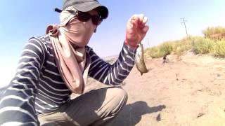 Рыбалка на островах на Каспийском море( день 2)(второй день подряд ездили на те же острова что и в первом видео.поймали даже больше чем в первый раз.из минус..., 2015-09-15T13:46:37.000Z)