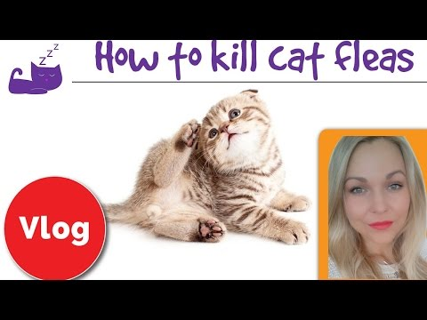 How To Get Rid Of Fleas On A Cat And In Your House