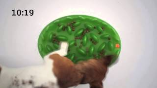 Interactive Slow Feed Bowl For Dogs / Green by Northmate