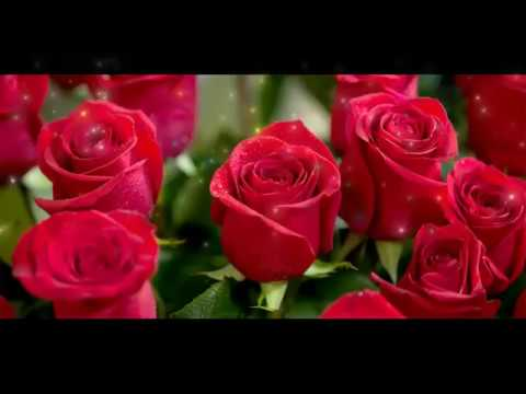 Beautiful And Lovely Good Morning Red Rose Hd Wallpaper Wishes
