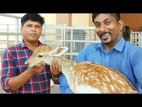12-kg-deer-curry-|-cooking-in-dubai-village-|-deer-curry-recipe-|-cooking-skill-village-food