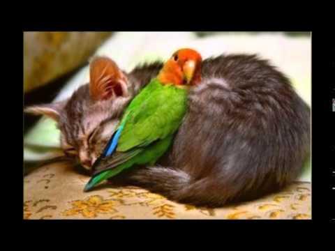 Gute Nacht Meine Freunde