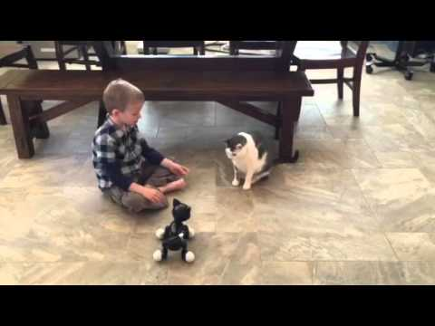 Earl and the zoomer cat