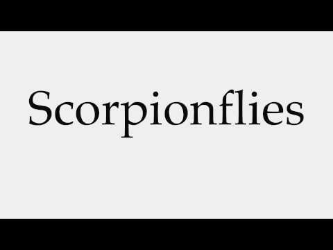 How to Pronounce Scorpionflies