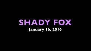 Shady Fox
