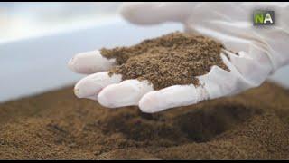 NA La création d'une farine d'insectes riche en protéines pour la consommation animale attire la FAO