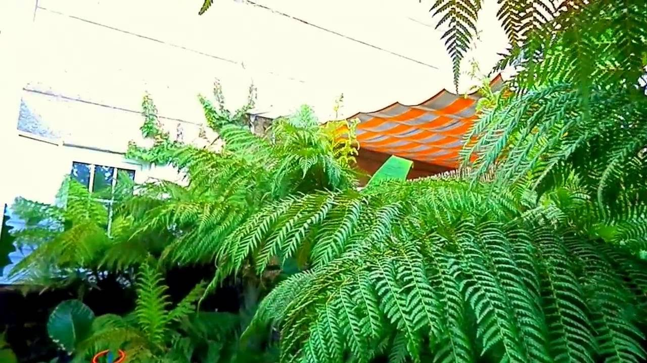 Mi jardin tropical en el escorial madrid youtube for Jardin tropical