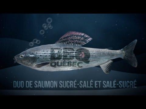 bbq-québec-:-saumon-sucré-salé-et-salé-sucré