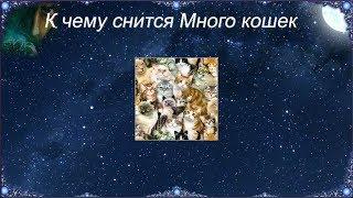 К чему снится Много кошек (Сонник)