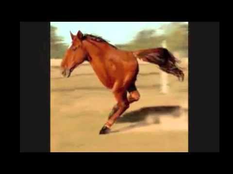 2 legs horse retard (original) retarded song chacarron macarron comando tiburon.