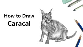 How to Draw a Caracal with Pencils [Time Lapse]