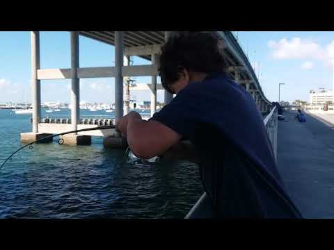 Saltwater Fishing In West Palm FL