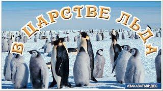 В царстве снега и льда   слайд шоу Арктика и Антарктика