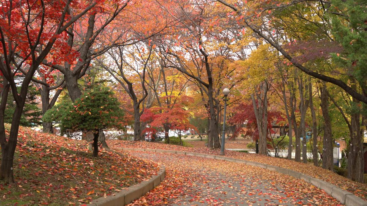 Image result for olympic park seoul autumn