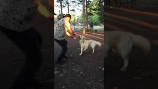 funny moment with dog