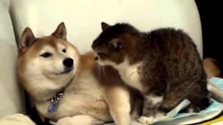 Любовь кота и собаки!