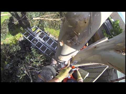 Husqvarna T536 Li Xp Lithium Ion Battery Chainsaw Review