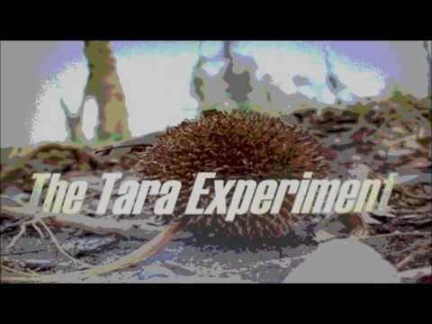 The Tara Experiment - Operator 13